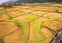 稻田裡的新台灣之光