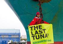 為永續漁業和監督造紙業 前進台灣