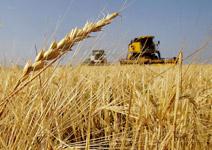 農糧投資長期走俏 頁岩氣動搖原油地位