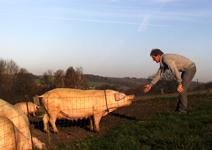 憑一張標籤,從餐廳追出豬隻出生地