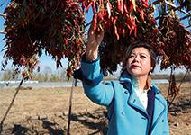 蔬菜力抗PM2.5,217畝農場大豐收