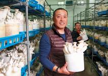 陳顯亮、李曙男 高技術標準 提高菇類身價