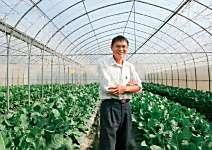 鄭聰祥 獨創直立栽種 產量多六倍