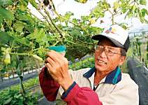 李春琦  四季鮮蔬 吃得到太陽能量