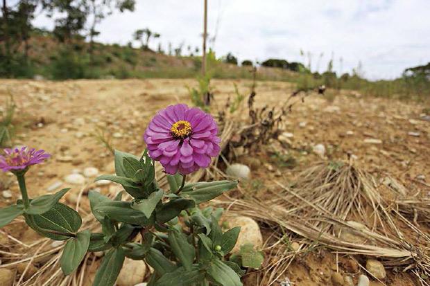 一部亂法 讓台灣農業深陷危機