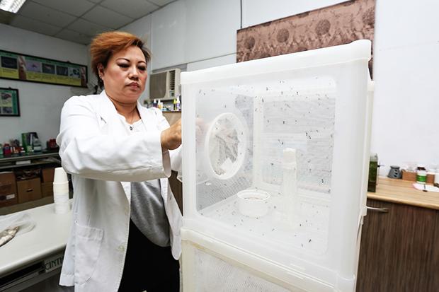 首創病媒蚊實驗室 12行政區對症下藥