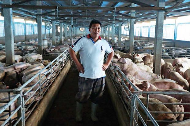 飼料、設備墊高成本,進口肉也來攪局