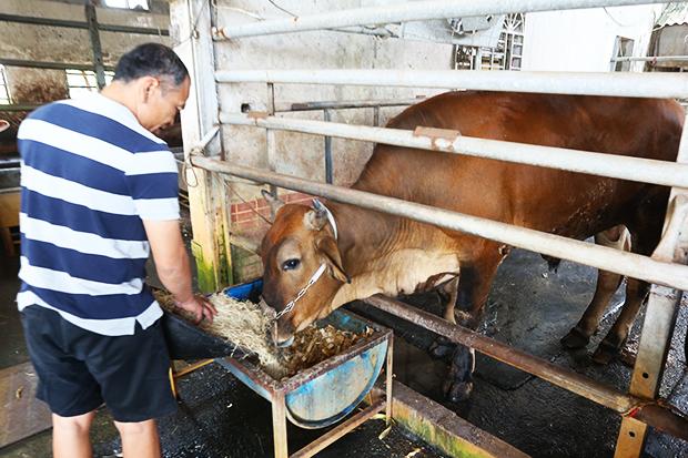 強化肉質鮮甜賣點, 台灣養牛戶也要站起來