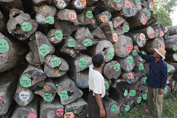 耕耘30年學「識木」 把柚木加工賣到全球