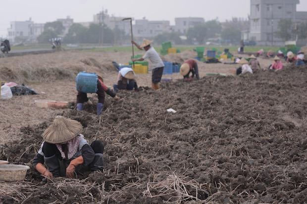 氣候變遷三大衝擊 農業面臨生存浩劫