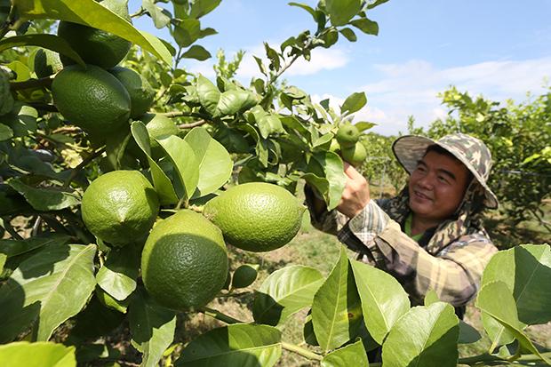 農產品行銷有成  屏東、嘉縣均獲逾三成肯定