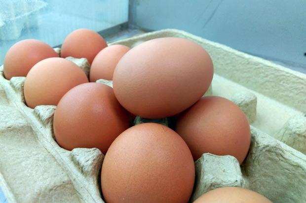 譚敦慈:蛋煮熟無法排除戴奧辛 建議消費者這樣自保