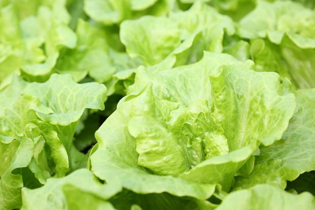 生菜、堅果、芽菜...裸食常用食材的處理方式