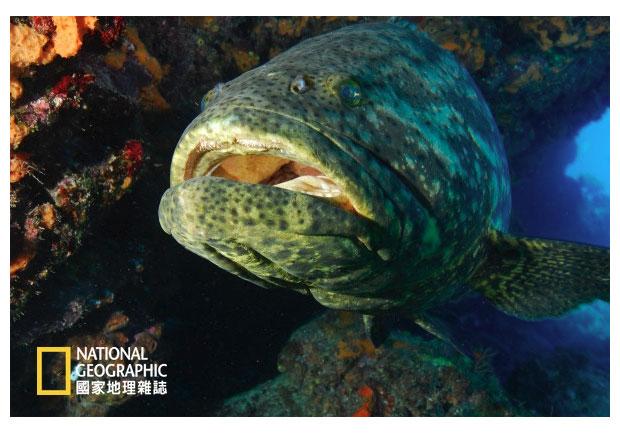 石斑吃鯊魚,案情不單純