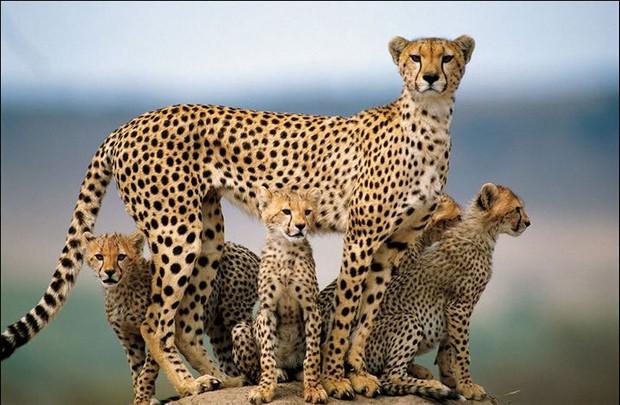 人類還沒覺悟?4年後野生動物比50年前少2/3