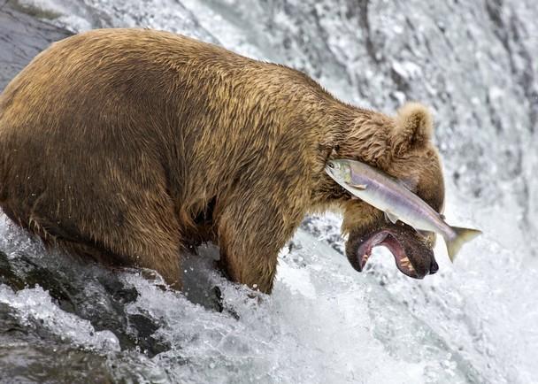 動物也會凸槌!喜劇攝影獎喚起世人環保意識