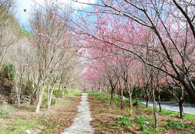 武陵農場,繁花盛開的視覺響宴