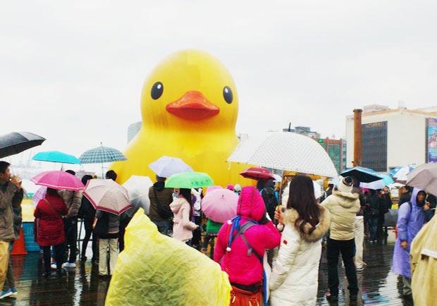 遊基隆小鴨開箱文,風雨中小鴨依然好堅毅啊!