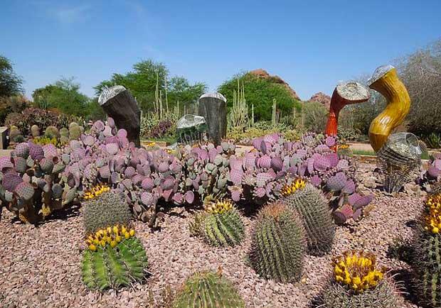 讓人大開眼界的仙人掌!造訪鳳凰城「沙漠植物園」