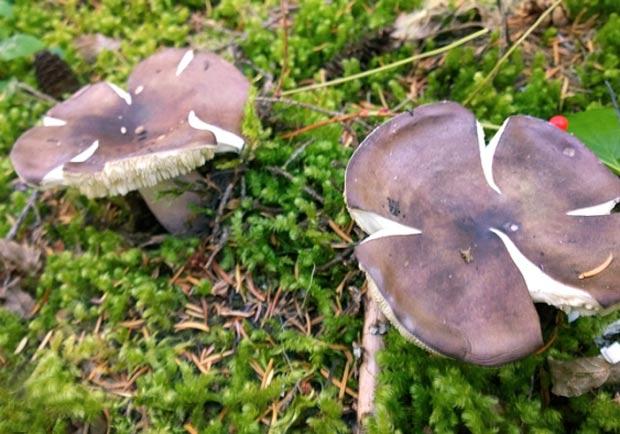 天涼好個秋,溫哥華採菇季正式來臨!