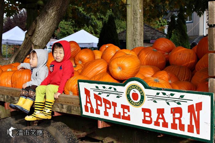 深度體驗秋天滋味:走玉米迷宮、採蘋果、逛南瓜田