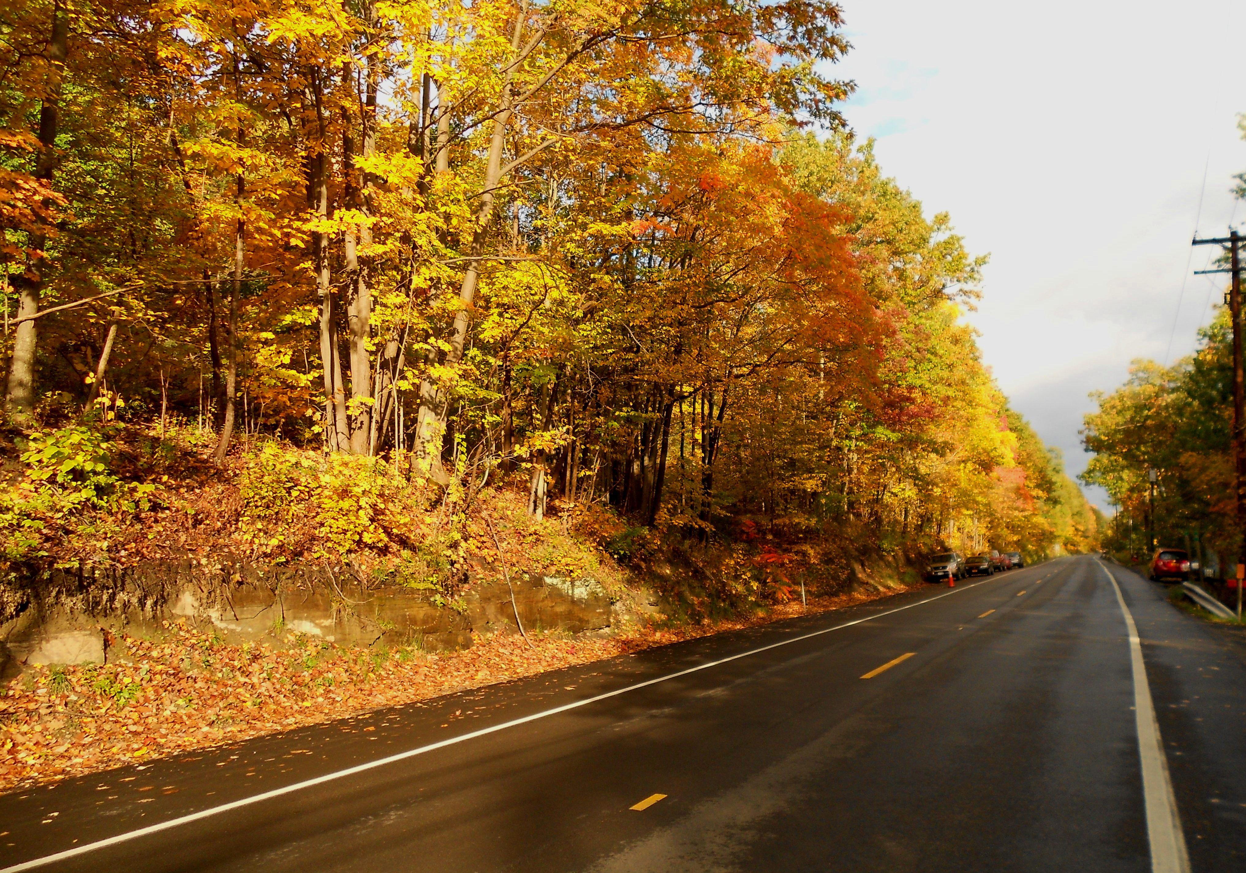 秋意正濃!來看紐約州的美麗秋葉