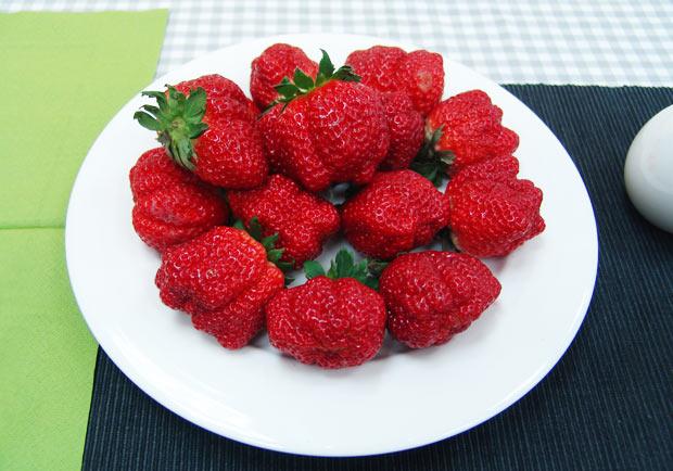 全台最大草莓來了! 歷經11年培育成功
