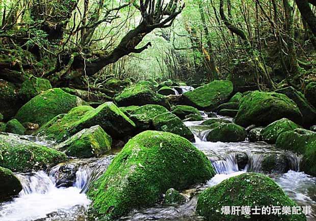 日本小島旅行──世界遺產海上阿爾卑斯屋久島