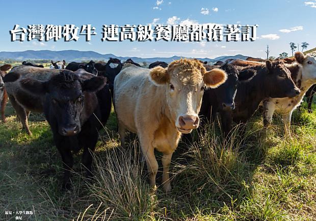 台灣御牧牛,連高級餐廳都搶著訂