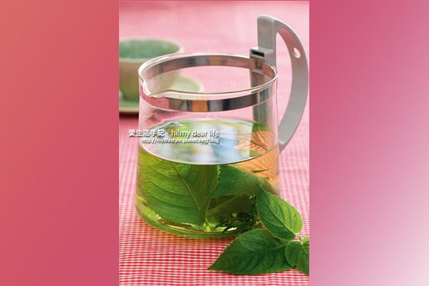 香草植物入門款!最好種的5種香草植物