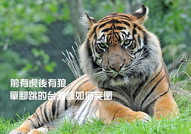前有虎後有狼,單腳跳的台灣該如何突圍?