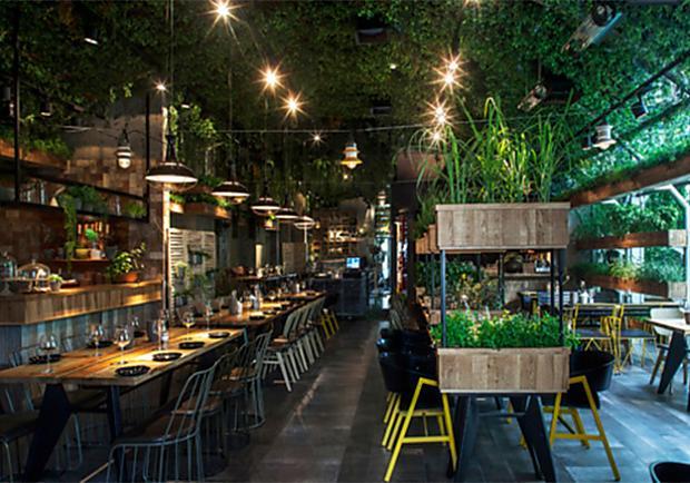 想吃什麼香料直接摘!綠餐廳讓你吃到「真正的新鮮」