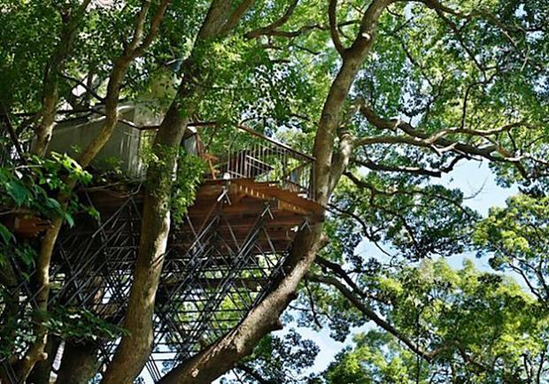 樹屋達人小林崇打造日本最大樹屋,一起住在300年的古樟木裡吧!