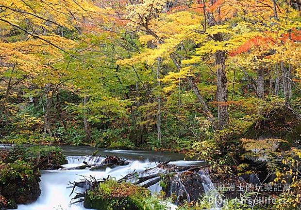 怎麼拍都好看!前進日本青森超美的賞楓景點──奧入瀨溪流