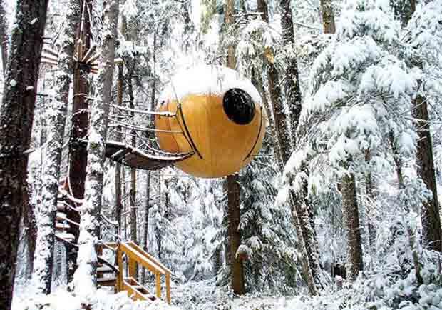 宛如高掛森林間的大鈴鐺!來溫哥華入住球形樹屋