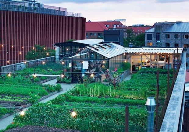 抬頭就能望見農家!哥本哈根打造屋頂農場+有機餐廳