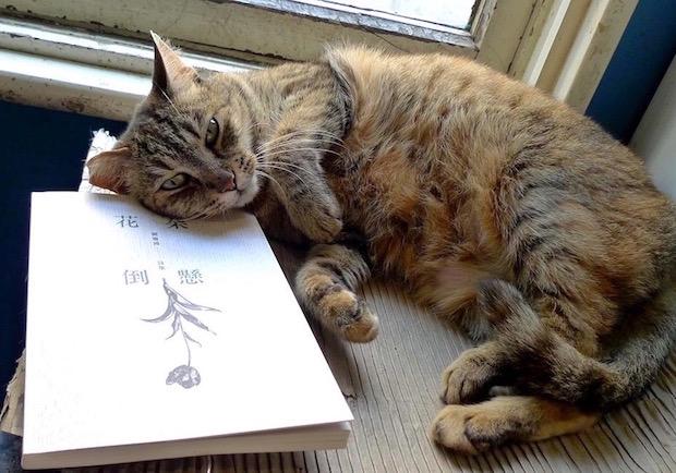 比閱讀還驚奇!100隻的貓貓,輪流在淡水「有河書店」伴讀
