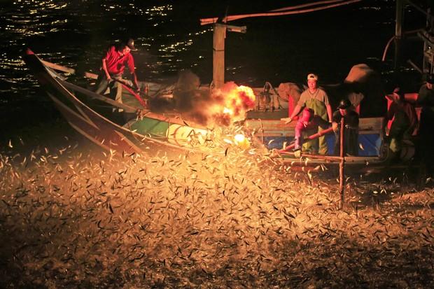萬魚奔騰跳躍!金山「蹦火仔」的古早漁法奇觀