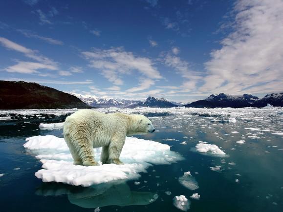 人類破壞何時停止?40年內全球野生動物少了一半!