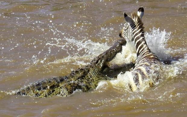 最恐怖的殺手!你知道害死人類最多的動物是?