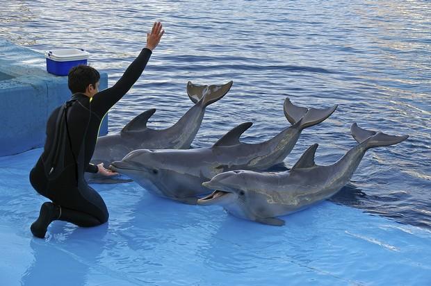 別再去看鯨豚表演!海洋世界最哀戚的現實悲歌