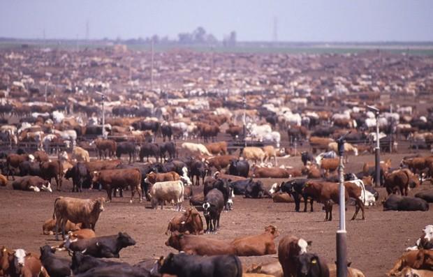 全球暖化的元兇,畜牧業比你想像的還嚴重