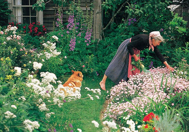 日本人最憧憬的女性 塔莎:園藝讓我從未陷入低潮