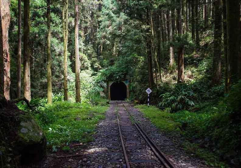 阿里山也有「神隱少女」山洞 黑暗隧道口突見森林