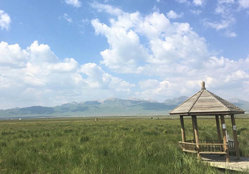 草原雙生花——俄麼塘花海、若爾蓋花湖