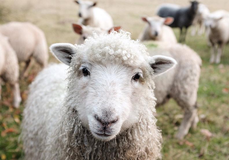 動物權利,或動物責任?