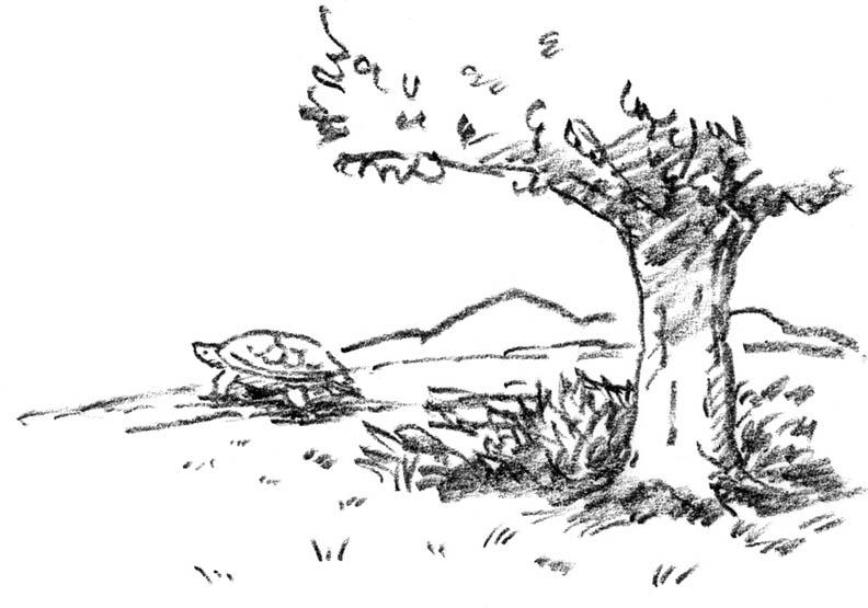 誰也不相信誰 烏龜的野餐毀了