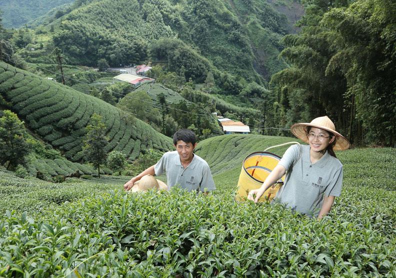古法製茶  426項農藥檢驗合格