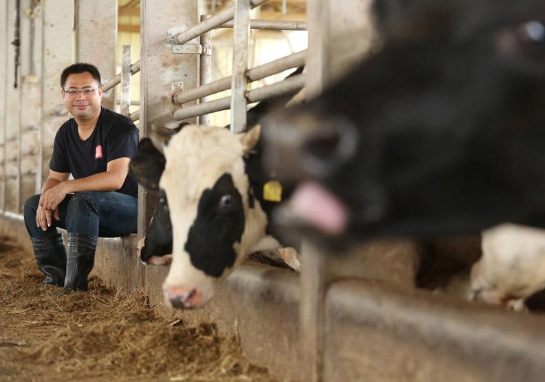 牛隻吃蔬果長大 口感鮮嫩