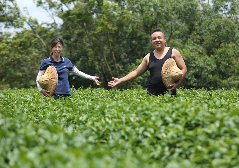 12道製程 把茶葉當精品賣